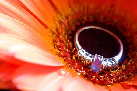 Close-up of engagement ring on a daisy - shallow depth of field photo