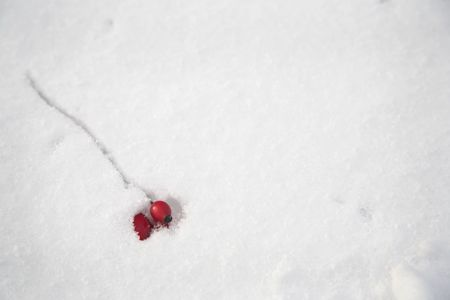 Red berries in snow.  copy space. Stock Photo - 338660