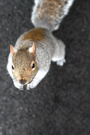 Squirrel looking up.  Shallow D.O.F. Stock Photo - 345219