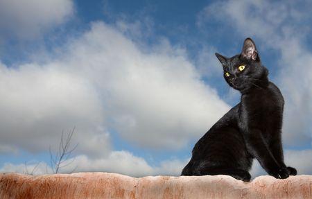 Gato negro en una pared