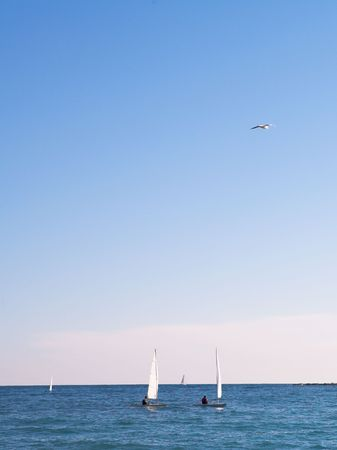 The sea and some sailboats in Antibes, France.  Movement on the flying bird.  Copy space. photo