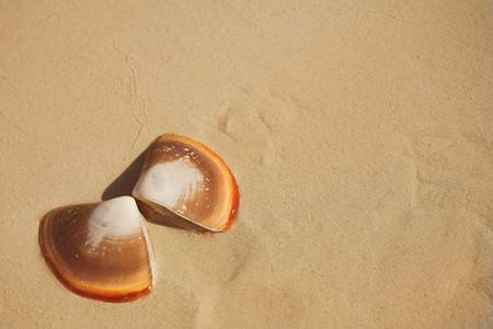 Two halves of a butterfly shell lying on wet sand on the beach next to the sea. Orange shells on brown sand with copy space on the right. photo