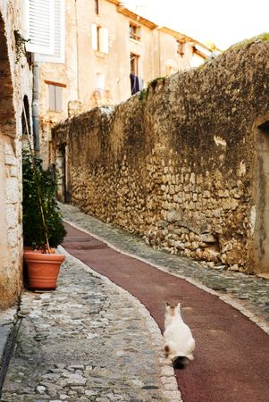 alpes maritimes: White cat sitting in an alleyway in the quaint little French hilltop village of Saint-Paul de Vence, Southern France,  Alpes Maritimes, next to the Mediterranean sea - A Heritage Site