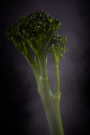 Fresh long stalk purple sprout broccoli in mist against a black background. Stock Photo - 19371628