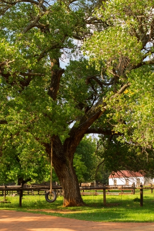 Tire Swing hanging from a big oak tree on a farm on a wonderful summers day with green grass everywhere photo