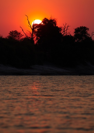 chobe: Red African sunset from the Chobe River in Southern Africa - Copyspace