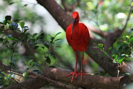 red bird Stock Photo - 10821296