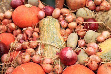 Vegetable thanksgiving 版權商用圖片