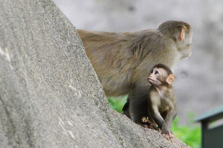 macaque: Macaque