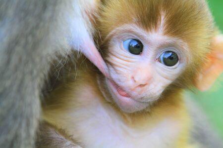 macaque: Macaque baby