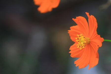 orange Flower Stock Photo - 8354408