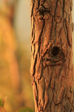 木の樹皮のクローズ アップ 写真素材