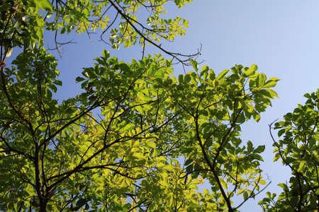 tree Stock Photo - 11315386