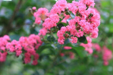 no boundaries: pink flower
