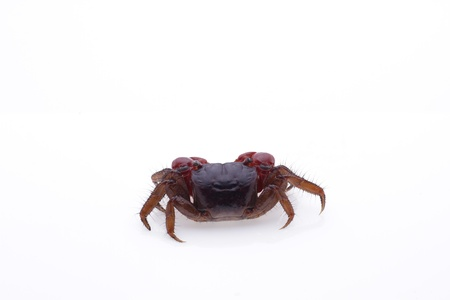 Crab Stock Photo - 10625498