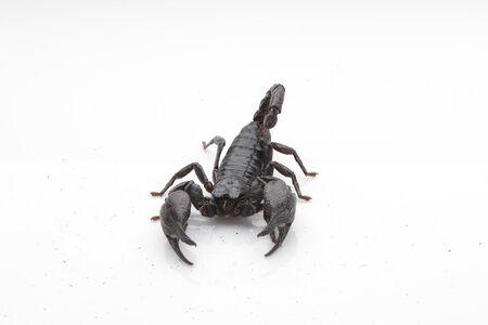 Scorpio photo