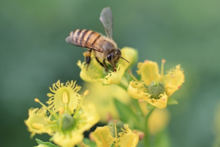 yellow flower and bee photo