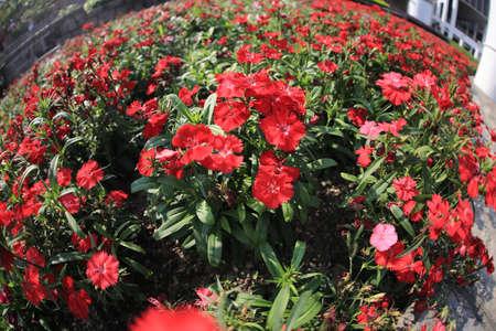 virágágy: flower bed