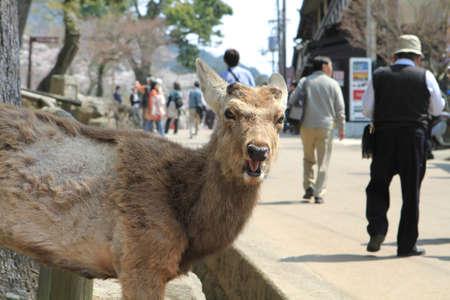 nara: nara ,deer