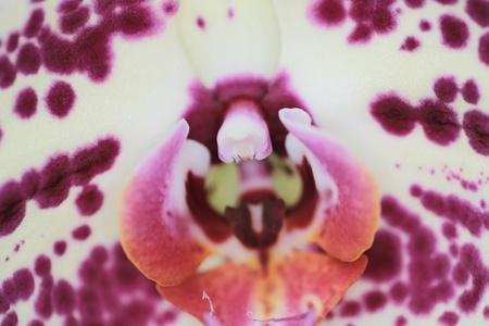 orchidaceae: Orchidaceae
