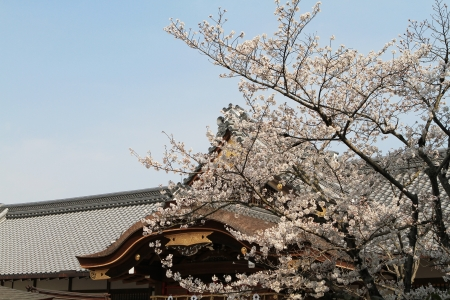 Sakura and temple photo