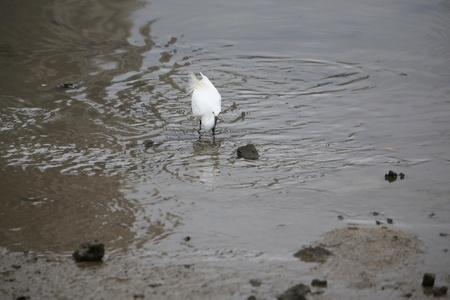 egret: Egret Stock Photo