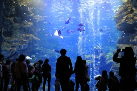 aquarium Stock Photo - 14019020