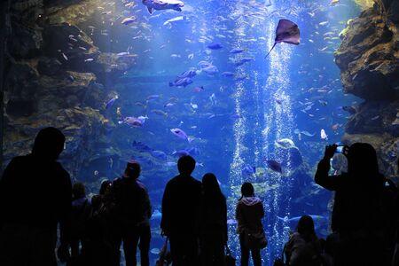 aquarium visit: aquarium