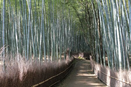 Bamboo Forest Stock Photo - 13883286
