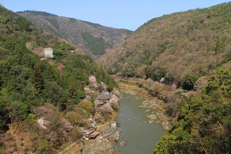Mountain and Sakura photo