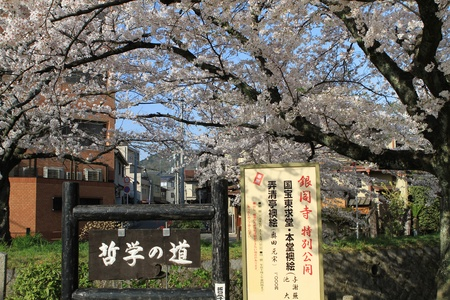Saku  Kyoto, Japan - Philosopher s Walk, A Hiking Path Famous For Its Cherry Blossom