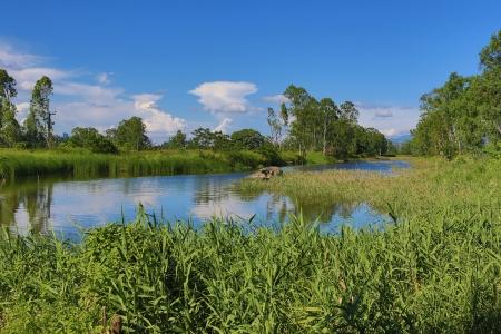 濕地 版權商用圖片 - 17136893