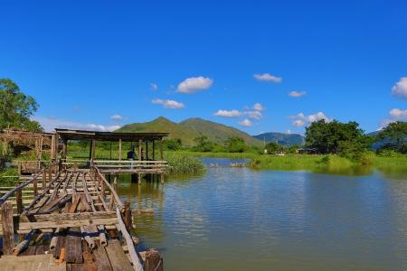 wetlands: nature view