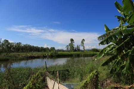 wetland photo