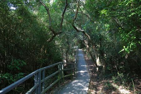 elevated walkway: ho ha wan nature path Stock Photo