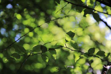пышной листвой: Яркий зеленый фон пышной листвой