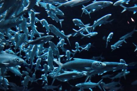aquarium Stock Photo - 19236503