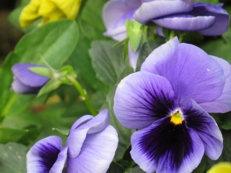Closeup Of Flower photo