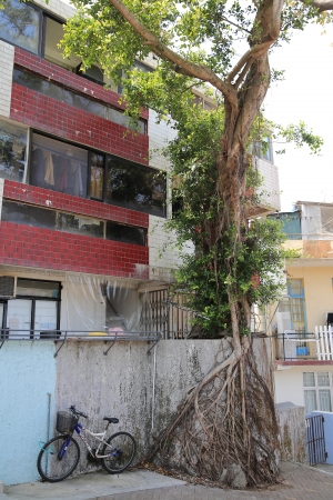 Hong Kong Cheung Chau Island s old apartment photo