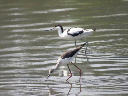 water bird Stock Photo - 19189526