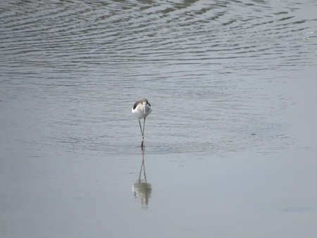 water bird Stock Photo - 19189528