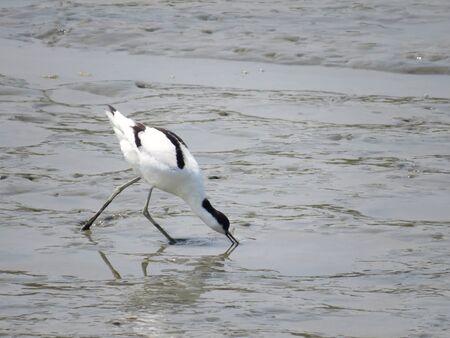 water bird Stock Photo - 19189662