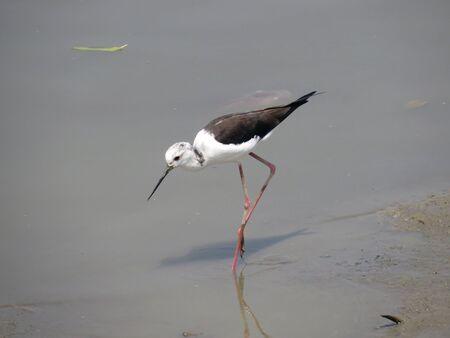 water bird Stock Photo - 19189533