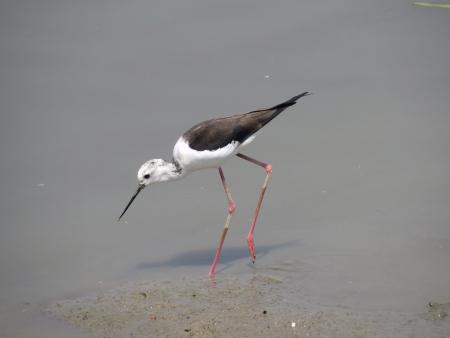 water bird Stock Photo - 19189552