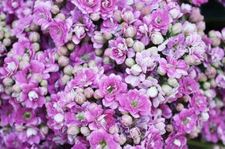 virágágy: virágágy Stock fotó