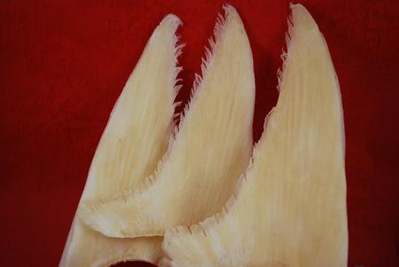 broiling: Shark fin