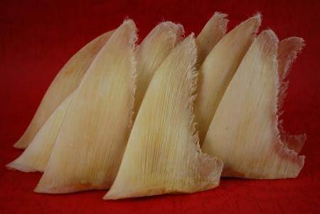 鮫のひれ 写真素材