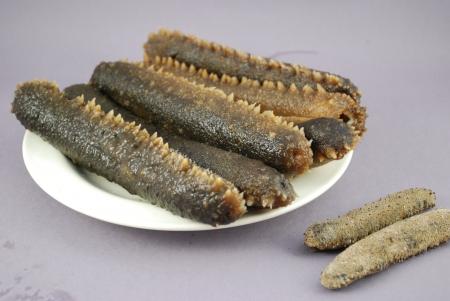 Sea cucumber photo