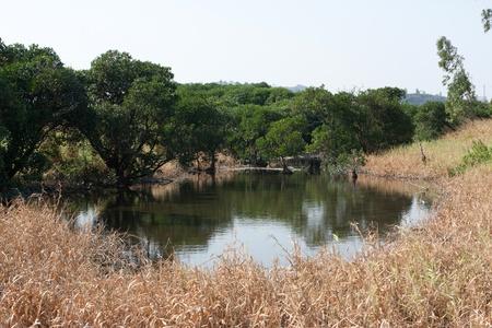 swampland: wetland park