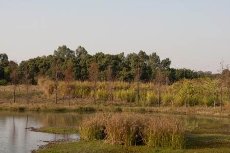 wetland park photo